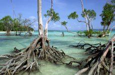 Андаманские острова как добраться
